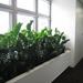 Rastliny pre interiér